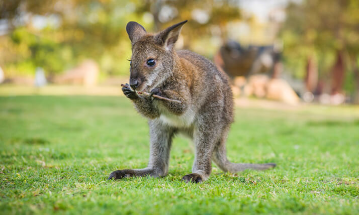 Kindergarten and school incursions with Australian animals