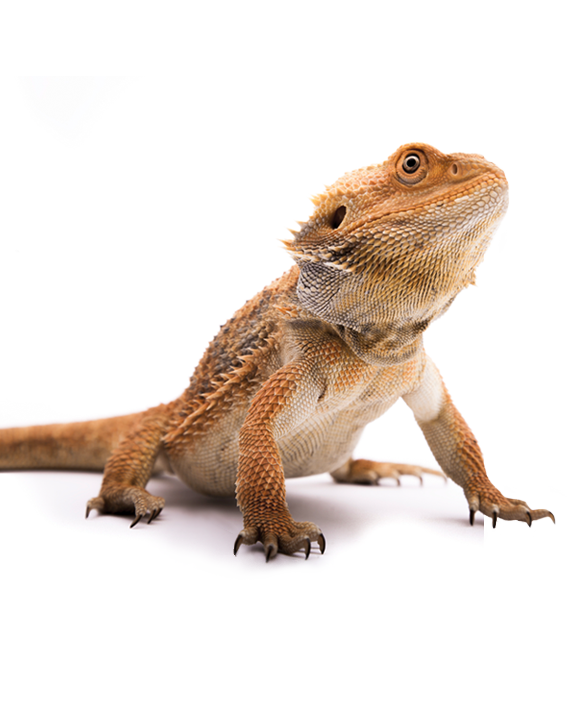 Find out more about our reptile incursions for primary schools and kindergartens.