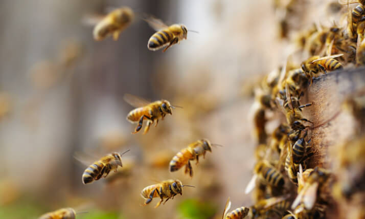 beekeeping incursions for primary schools Melbourne