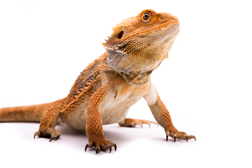 Learning Highlights radical reptile _1 responsive size