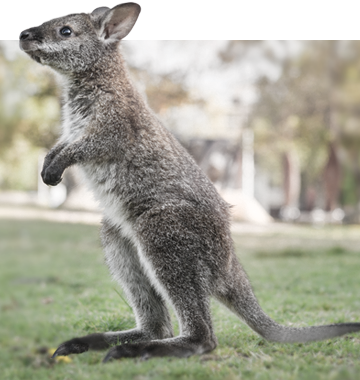 school wildlife incursion Australian animal incursions